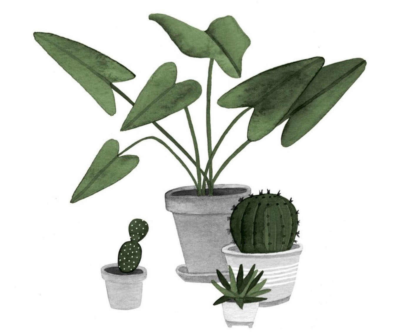 houseplants Shinrin-yoku