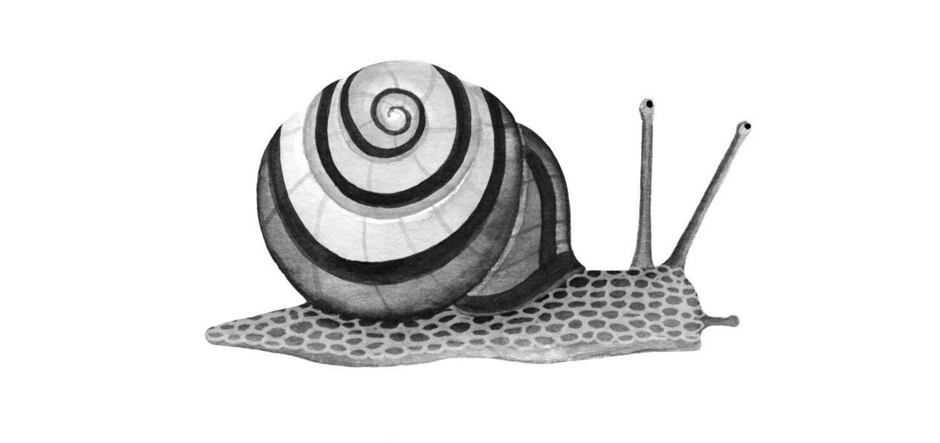 snail shinrin-yoku